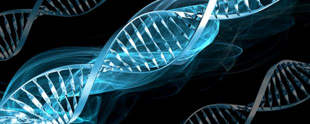Новосибирские ученые совершили прорыв в области генной терапии