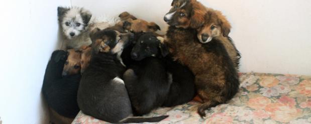 Под Новосибирском строят реабилитационный центр для собак