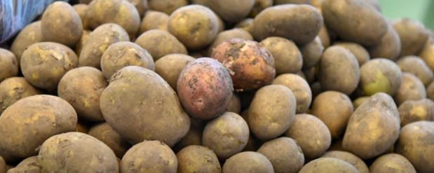 В Новосибирске должник по кредитам прятался в мешке с картофелем от судебных приставов
