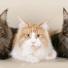 Суд в Новосибирске будет делить котов между бывшими супругами